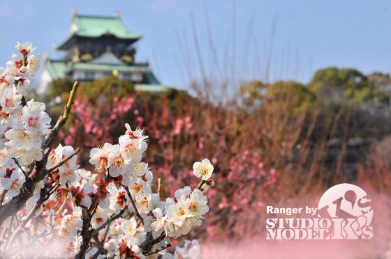 2010大阪城梅林 (1).jpg