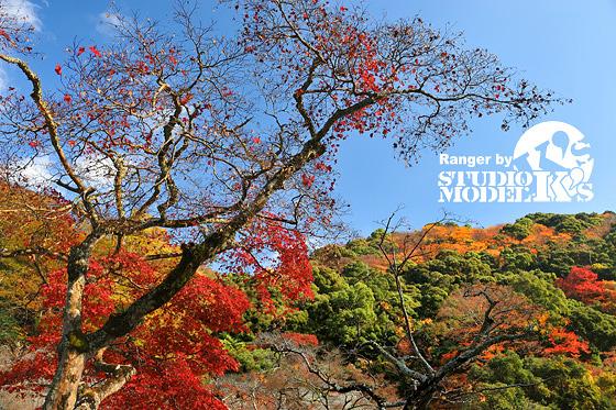 Autumn09 (7).jpg