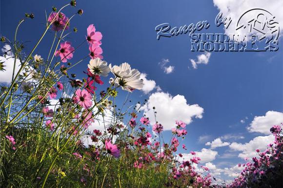 Ranger'sPhoto (13).jpg