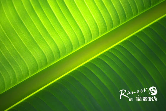 greens (5).jpg