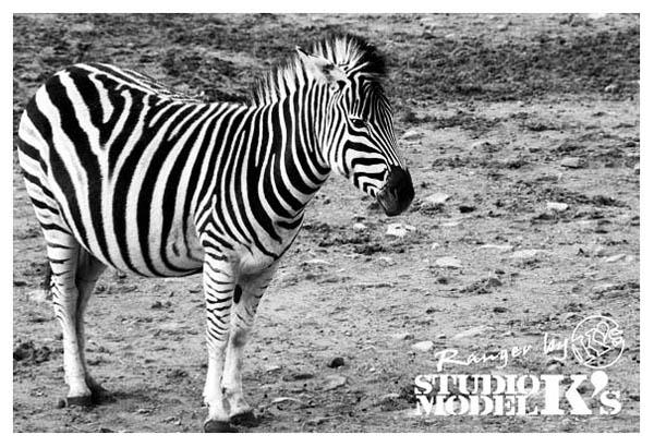 ranger's zoo-7.jpg
