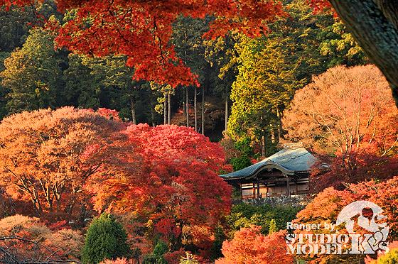 Autumn09 (10).jpg