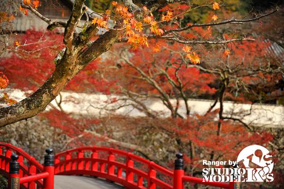Autumn09 (6).jpg