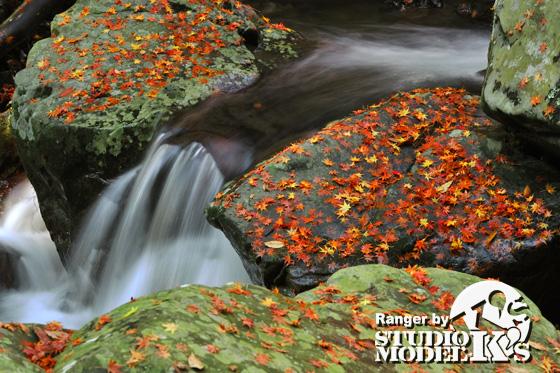 Autumn09 (8).jpg