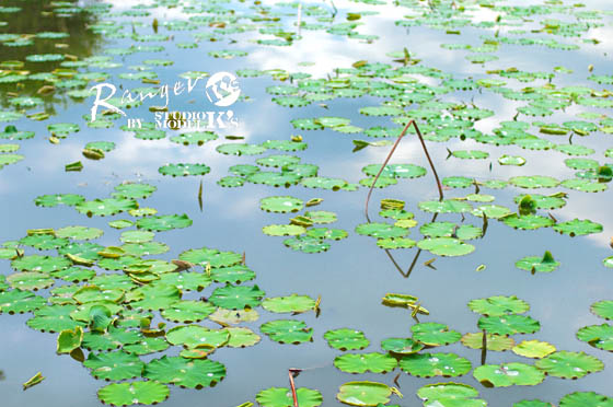 greens (3).jpg