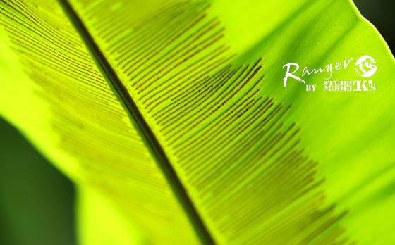 greens (4).jpg