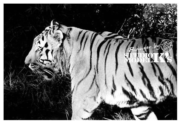 ranger's zoo-2.jpg